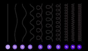 ヘアタイプ12種